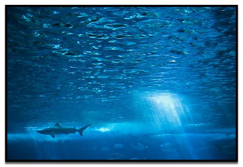 shark underwater with a bit of sun peeking through