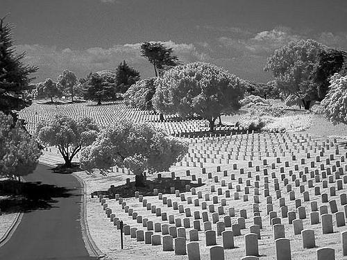 field of headstones